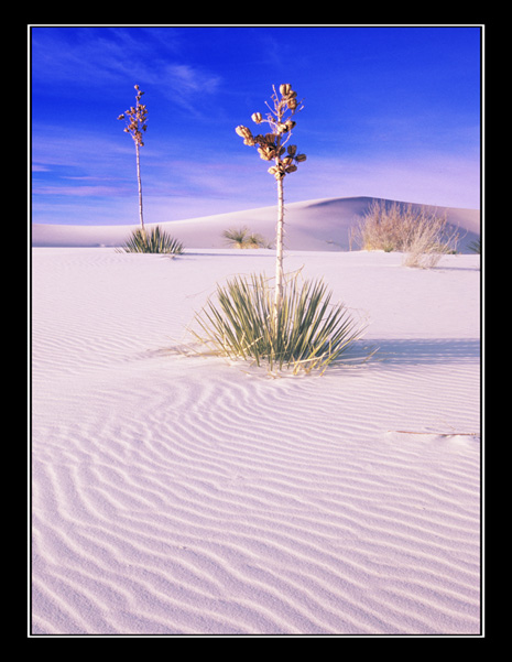 White Sands, New Mexico 2012