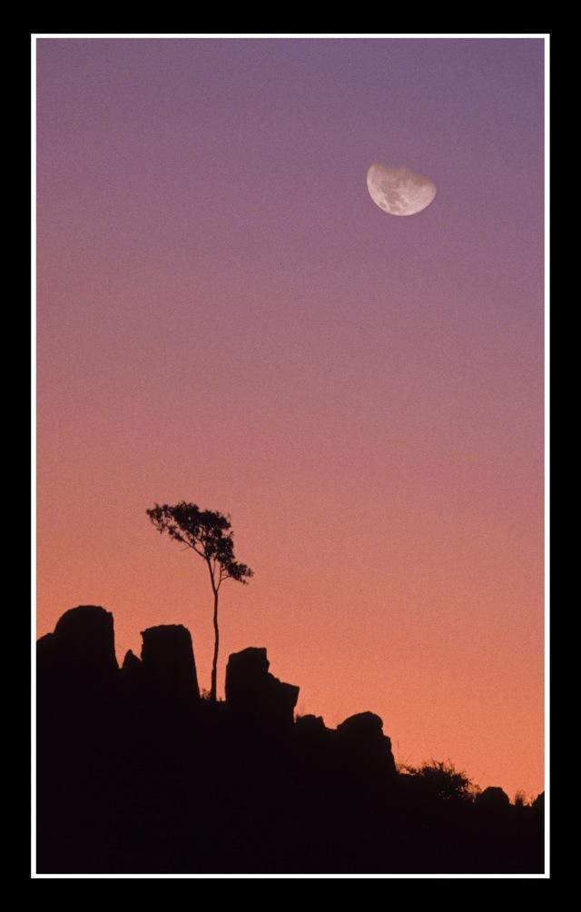 Lone Tree, Namibia 2007